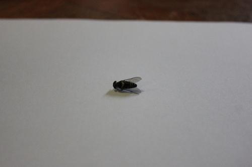 オロロ.JPGのサムネール画像のサムネール画像